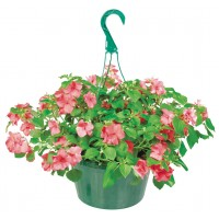 Flowers - 10 inch Hanging Baskets