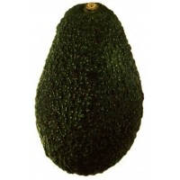 Avocado Fresh - 1CT